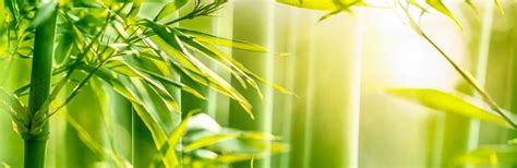 A Guide To Growing Bamboo | Love The Garden