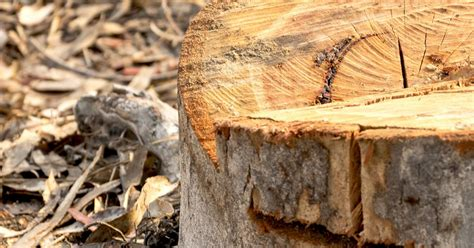 How To Remove Tough Tree Stumps & Roots | Love The Garden