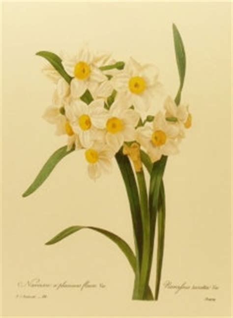 Jonquil [for Lord Darlington's buttonhole] [desire for